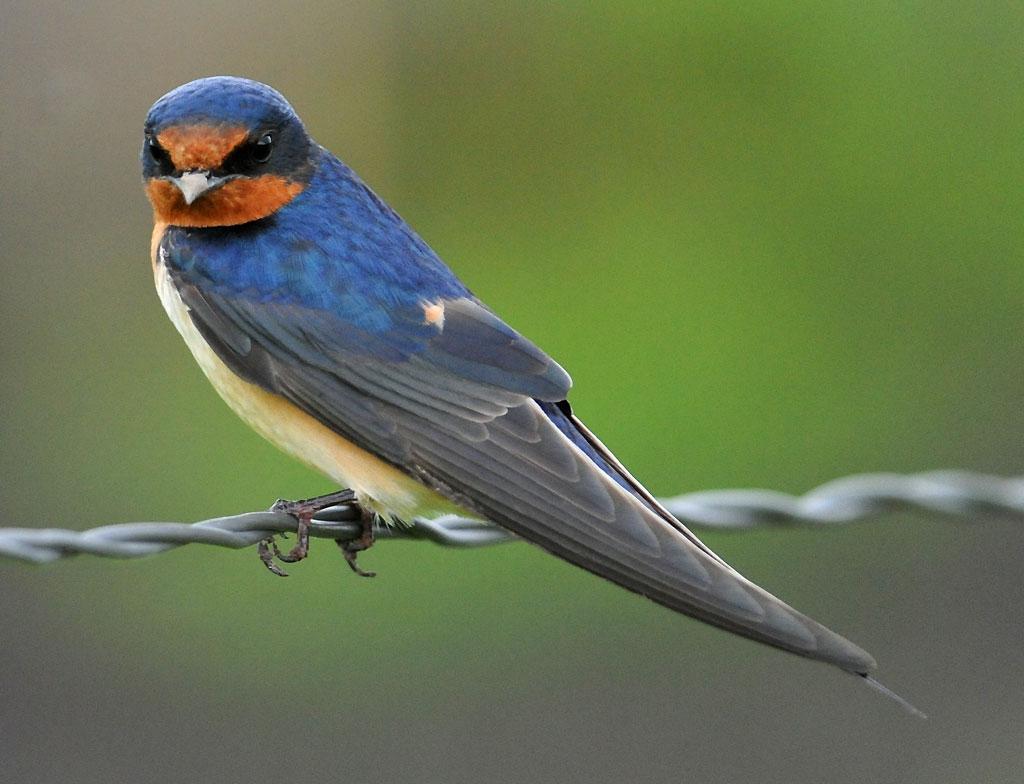 Cool Birds in Texas